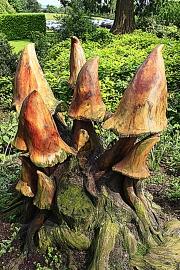 Wooden-mushrooms by David Foxwell