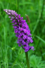 orchid-by-john-parsloe