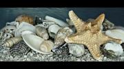 sea-shells-lesley-hunt