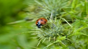 Ladybird by David Richens