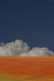 Poppies Sky by Malcom Cole